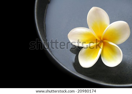 Bowl of water and frangipani flower