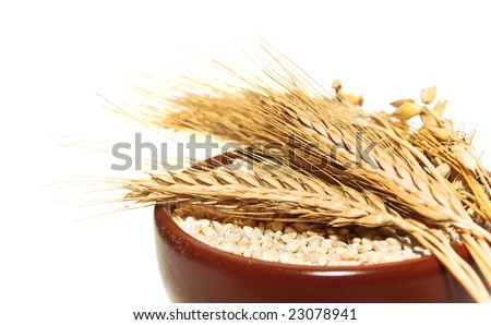 Bowl of wheat bran with barley ear on white background. It is common ingredient of  fitness meal. Cereals - healthy food, isolated on white.