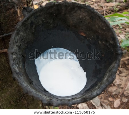 Bowl to collect milk from rubber tree