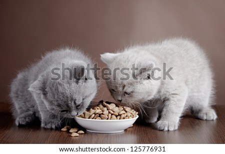 bowl with cat food and two kittens, selective focus