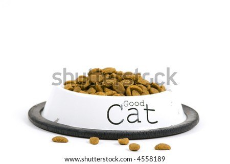Bowl with cat food. Isolated on white background