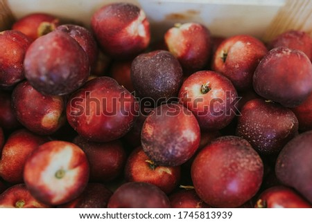 box full of nectarines after harvesting. Delicious nectarines. Red nectarines.
