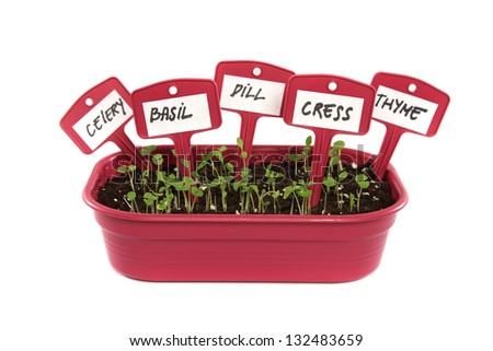 box with soil and plants on white background