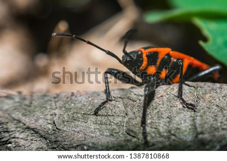 Boxelder bug and fly nature #1387810868