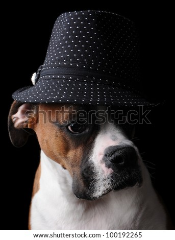 Boxer Dog Wearing a Hat - stock photo