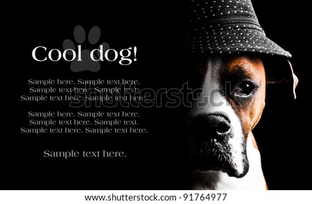 Boxer Dog Wearing a hat with text space to the left