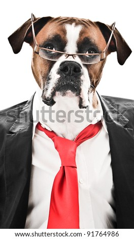 Boxer Dog wearing a suit, red tie and glasses