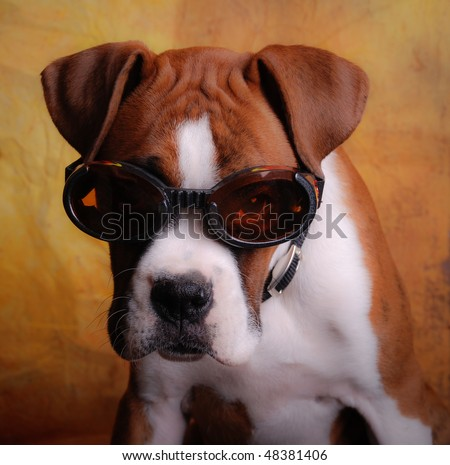 Boxer Dog Wearing Goggle Sunglasses