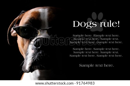 Boxer Dog wearing Sunglasses with text space to the right