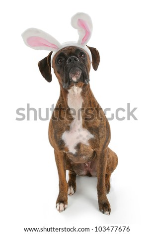 Bunny Rabbit Bulldog (With images)   Cute animals, Boxer ...  Boxer Dogs With Bunnies