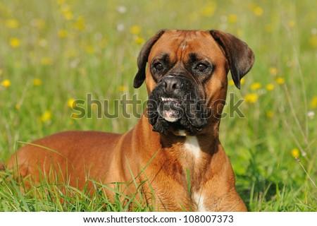Can Dogs Get Hantavirus
