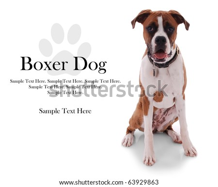 Boxer Dog with Sample Text Space and Paw Print to the Left