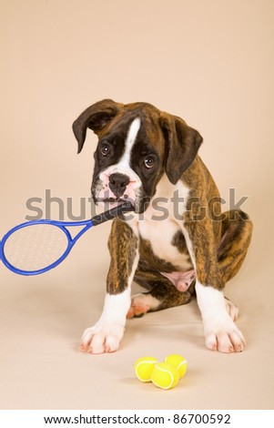 Boxer puppy with tennis racquet and balls on beige background