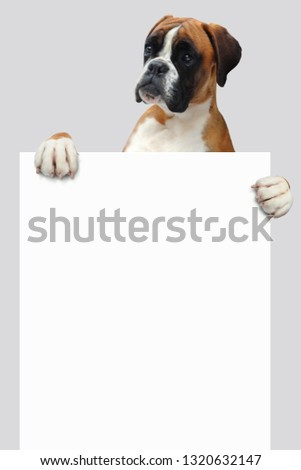 Boxer with Shield #1320632147
