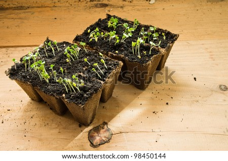 boxes with seedling on wooden table