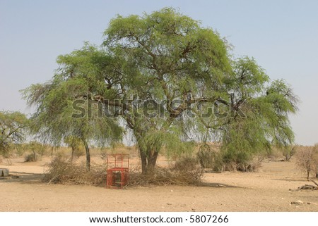 Boxtrap positioned right next to a cheetah marking tree for capturing cheetah, leopard or brown hyena in Namibia, Africa