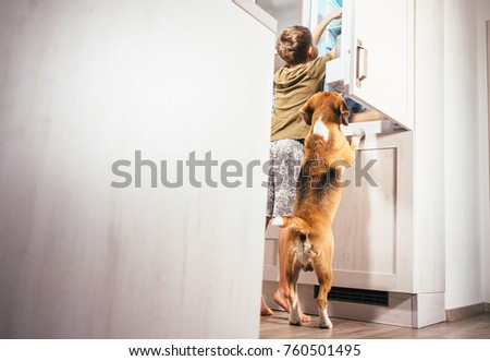 Stock Photo Boy and beagle dog look something delicious  in refrigerator