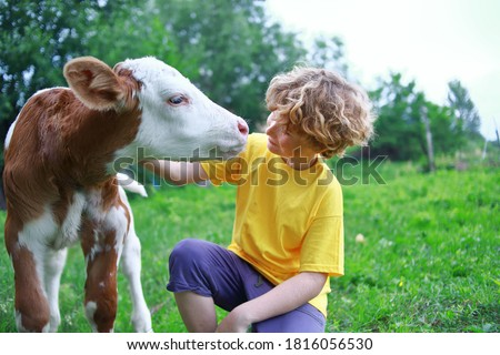 Boy and calf on the field.  Kid teenager and cow. Curly hair, brown bull, white caucasian face, spring summer morning, green background.  Boy farmer rancher and bull.