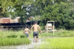 boy and friend are enjoy running and playing in rice farm