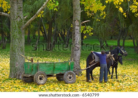 boy cares after the horse in the autumn forest