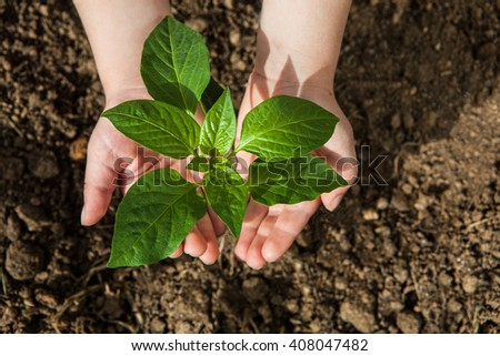 boy hands holding green small plant new life concept. #408047482