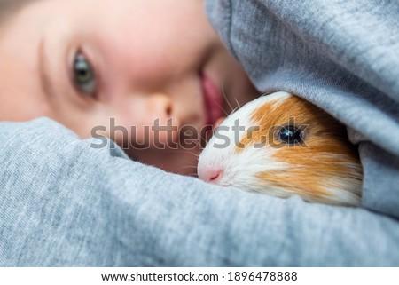Boy holding a guinea pig. A child hugs a guinea pig. Pet care concept. Сток-фото ©