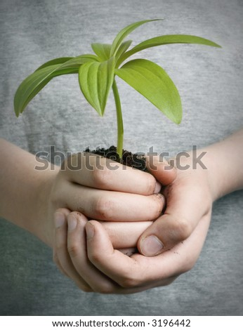 Boy holding seedling in cupped hands, close up on hands