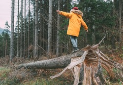 Boy in bright yellow puffer jacket walks in pine forest balancing on the falling tree. People and Nature concept image.