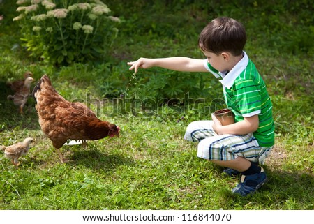 Boy is feeding chickens in the yard - stock photo
