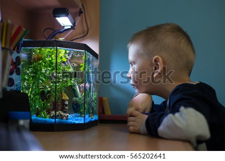 Shutterstock Boy is watching fish tank in his room, best pets for kids