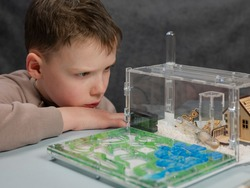 Boy looking at harvester ants in ant farm. Observation of ants behaviors. Domestic insects