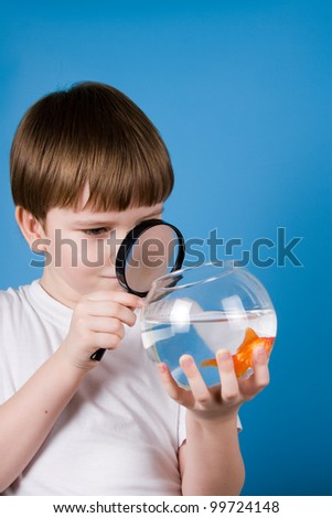 Boy looking through a magnifying glass on a goldfish on a blue background