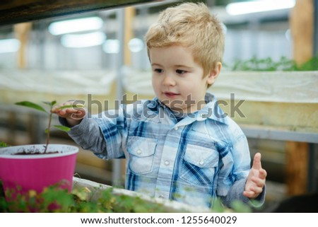 boy planting seeds. little boy planting seeds in greenhouse. boy planting seeds to grow a tree. boy planting seeds and take care of plant. #1255640029