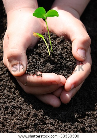 Boy planting sprouts just entered from dirt - stock photo