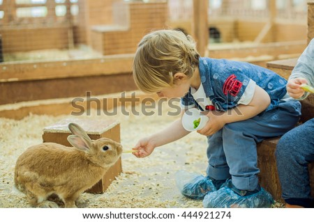 Boy play with the rabbits in the petting zoo #444921274