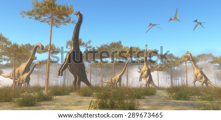 Brachiosaurus Browsing - A herbivorous sauropod dinosaur that lived in the Jurassic Age. A Brachiosaurus herd browse on tree tops as a flock of Pterodactylus flying reptiles fly overhead. Stock foto ©