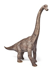 Brachiosaurus dinosaurs toy isolated on white background with clipping path. Dinosaur from the Jurassic Morrison Formation of North America.