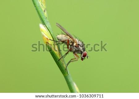 Brachycera, Deer fly, Horse-fly