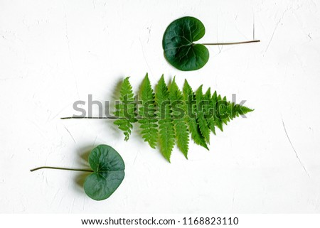 Bracken, fir branches and other plants on white background #1168823110