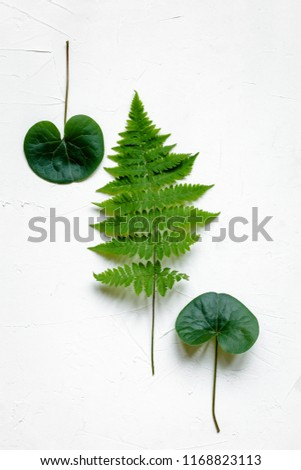 Bracken, fir branches and other plants on white background #1168823113