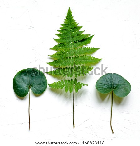 Bracken, fir branches and other plants on white background #1168823116