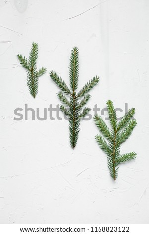 Bracken, fir branches and other plants on white background #1168823122