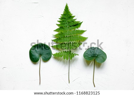 Bracken, fir branches and other plants on white background #1168823125