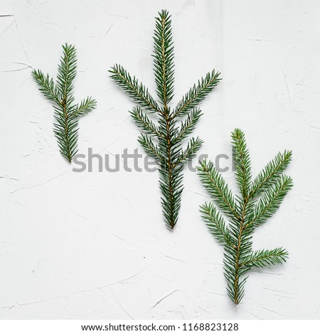 Bracken, fir branches and other plants on white background #1168823128