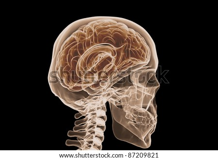 Brain and skull x ray image isolated on black