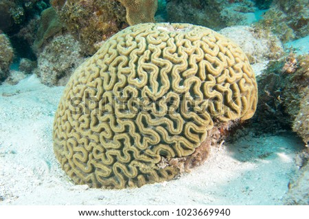 Brain coral in the bottom of the sea #1023669940