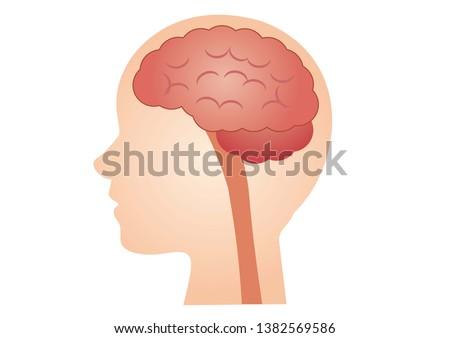 Brain, Health Care, Medical, Illustration