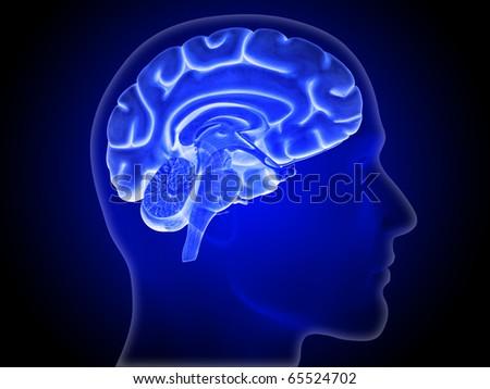 Brain, Hemisphere, Head Silhouette