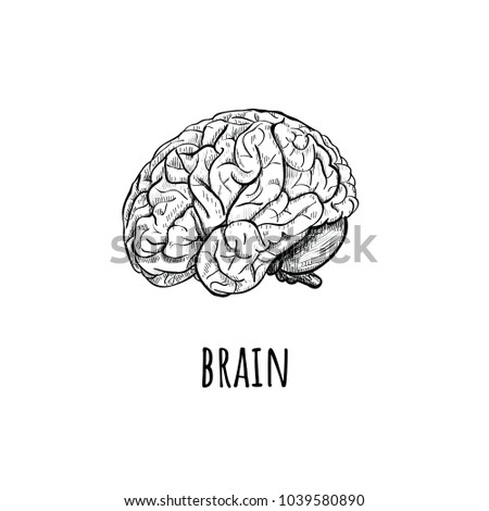 Brain Illustration. Brain side view with soft drawing illustration on white background. Sketch brain hand drawing.