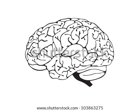 brain is a black and white side view